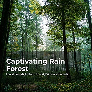 Captivating Rain Forest