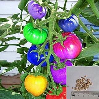 Rosepoem 100 unids muy raras semillas de tomate arco iris importadas bonsai semillas de frutas y verduras plantas no macet...