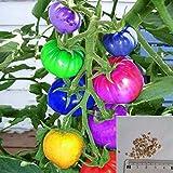 Rosepoem 100 unids muy raras semillas de tomate arco iris importadas bonsai semillas de frutas y verduras plantas no macetas en OGM para el jardín de su casa