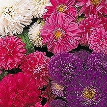 CER0T Egrow 50Pcs/Pack Callistephus Seeds Dwarf Plants Flowers for Garden Patio Balcony Bonsai