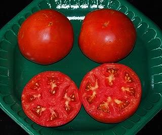 Celebrity Hybrid Tomato Seeds***bulk 300 Pkt. *** Heavy Producer*compact Plant*