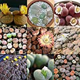 OYTRO New Ornamental Plants Home Gardening Mixed Succulent Stone Flower Seeds Cacti & Succulents