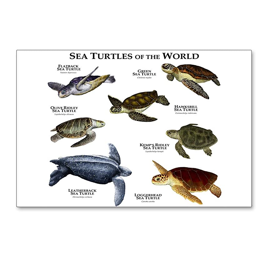 CafePress - Sea Turtles Of The World - Postcards (Package of 8), 6