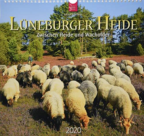 Lüneburger Heide - Zwischen Heide und Wacholder: Original Stürtz-Kalender 2020 - Mittelformat-Kalender 33 x 31 cm