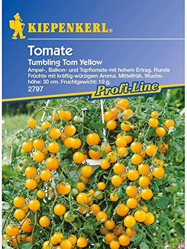 Kiepenkerl Tomaten Tom Yellow
