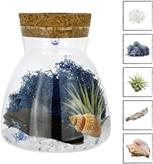 NW Wholesaler Live Tillandsia Air Plant Terrarium Kit with Color Changing LED Light Display - Multi Color Illuminating Light Changes Air Plants Colors (Clear Pebbles)
