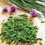 100pcs / lot de las cebolletas chinas de Semillas Semillas Allium Schoenoprasum Condimento vegetal Oriental ensalada de cebolla semillas de hortalizas Bonsai bricolaje