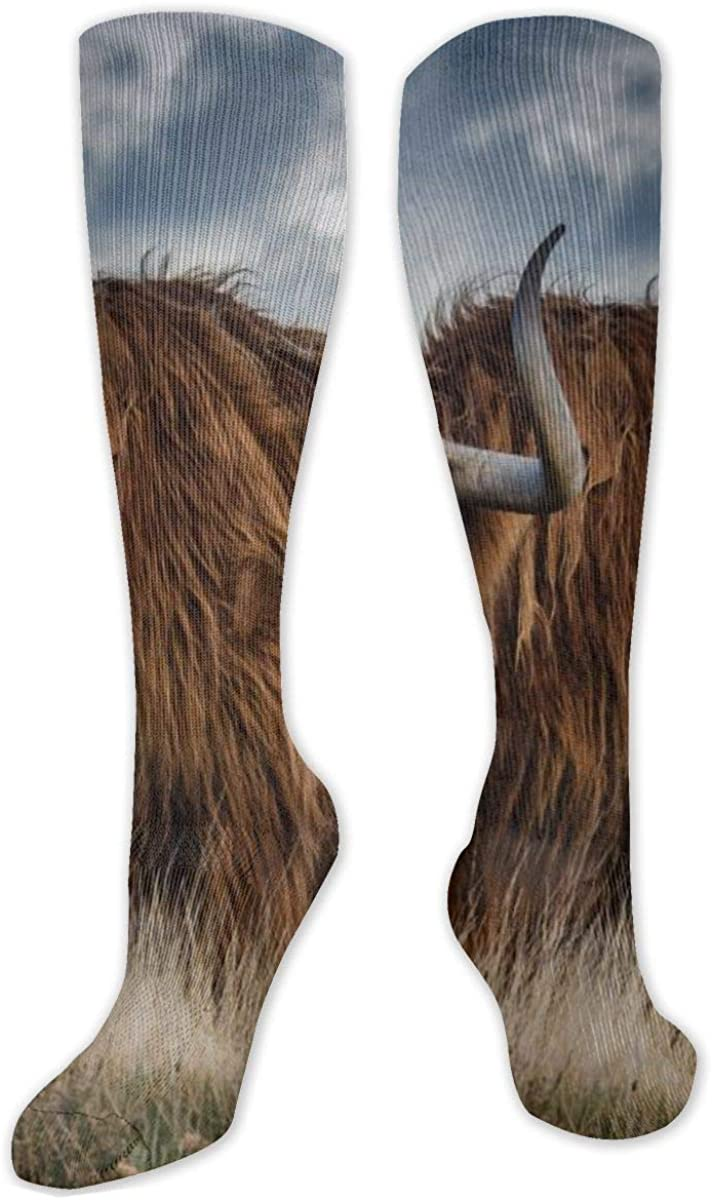 Blue Sky Highland Cattle Knee High Socks Leg Warmer Dresses Long Boot Stockings For Womens Cosplay Daily Wear