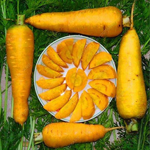 100pcs jaune carotte Graines goût fantastique Rare inhabituel Diy jardin usine Livraison gratuite des semences Bonsai bio