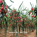 AAA 2016 Bonsai pitaya Semillas Semillas 200pcs 10kinds mezclan furit novela de Plantas para Jardín de envío gratuito