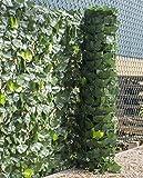 Woodside - Sichtschutzhecke aus künstlichen Efeublättern - für Gartenzäune & Mauern - 1mx3m