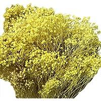 WDOIT - Ramo de Flores secas Naturales Gypsophila, para decoración de casa, jardín, casa, Boda, Fiesta, 1 Piezas