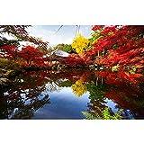 Vinilo personalizado fotografía fondos paisaje tema fotografía fondo A8 2.7x1.8m