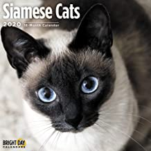 2020 Siamese Cats Wall Calendars by Bright Day Calendars 16 Month Wall Calendars 12 x 12 inches Kitten Calendar