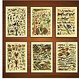 Vintage Adolphe Millot Enciclopedia Carteles Reptiles Cangrejo Pescado Clásico Lienzo Pinturas Imprimir Pared Decoración infantil - 40x50x6Pcscm Sin marco