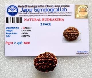 2 mukhi rudraksha nepal