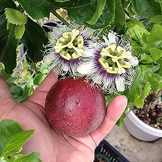 Best passion fruit plant Reviews