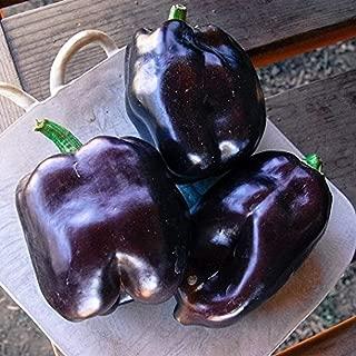 David's Garden Seeds Pepper Bell Purple Beauty 4614 (Purple) 50 Non-GMO, Heirloom Seeds