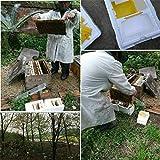 Hive Box Harvest - Colmena de polinización para apicultura de apareamiento de abejas, espuma para el día de San Patricio en color blanco