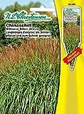 n.l. chrestensen 50340Flores Semillas, Amarillo, 11,5x 0,5x 15,6cm