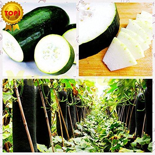 1bag = 50pcs vente chaude blanc graines de courge pastèque CHINOIS NO-OGM des semences de légumes géants délicieux bonsaï maison jardin