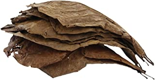 Flameer 10pcs Indian Almond Leaves Ketapang for Bettas Shrimps & Tropical Fishes