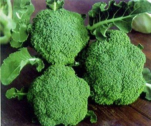 Seedscare F1 Hybrid Broccoli Kitchen Gardening Seeds (20 Seeds)