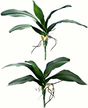 2 Pcs- Artificial Foliage Orchid Leaf Picks Simulation Phalaenopsis