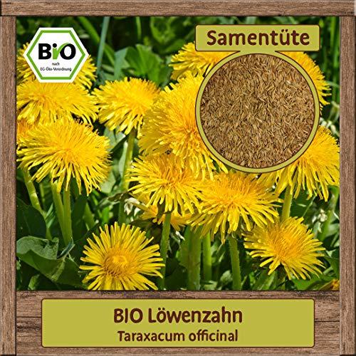 Samenliebe BIO Kräuter Samen Löwenzahn (Taraxacum officinal) | BIO Löwenzahnsamen Kräutersamen | Samenfestes BIO Saatgut für 3m²
