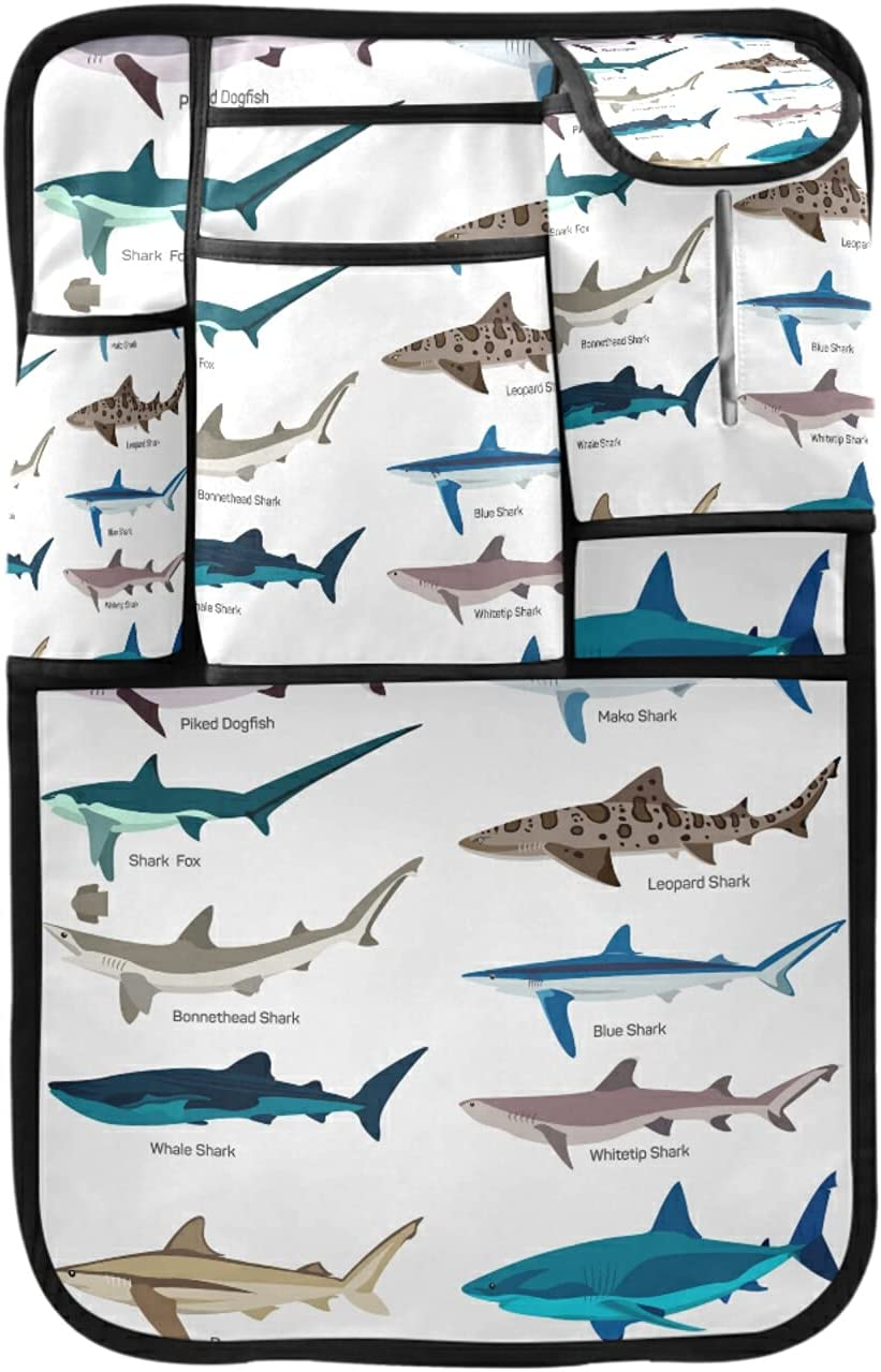 Different Kind Max 88% OFF of Sharks Species Background Isolated on Ki Be super welcome White