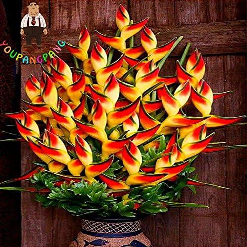 2017 nouvelles Plantes d'intérieur Fleurs Strelitzia Reginae Graines oiseau de paradis semences de fleurs pour le jardin et Jardin Bonsai 100 Pcs/Sac multicolore