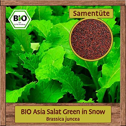 BIO Asia Salat Samen Green in Snow Pflücksalat (Brassica juncea) Asiasalat Gemüsesamen ganzjährig & winterhart
