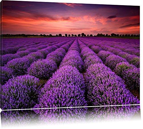 Wunderschöne Lavendel Provence Format: 60x40 auf Leinwand, XXL riesige Bilder fertig gerahmt mit Keilrahmen, Kunstdruck auf Wandbild mit Rahmen, günstiger als Gemälde oder Ölbild, kein Poster oder Plakat
