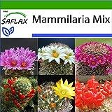 SAFLAX - Kakteen - Mammilaria Mischung - 40 Samen - Mit keimfreiem Anzuchtsubstrat - Mammilaria Mix -