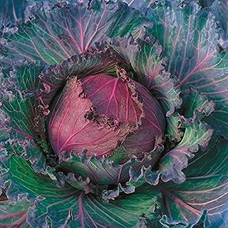 Kings Seeds - Cabbage January King (Award of Garden Merit) - 500 Seeds