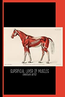 Superficial Layer of Muscles by Unknown Artist (1904) : College Ruled Notebook: Medical Illustration of Equine Muscular System - Horse / Gallery and Museum Art