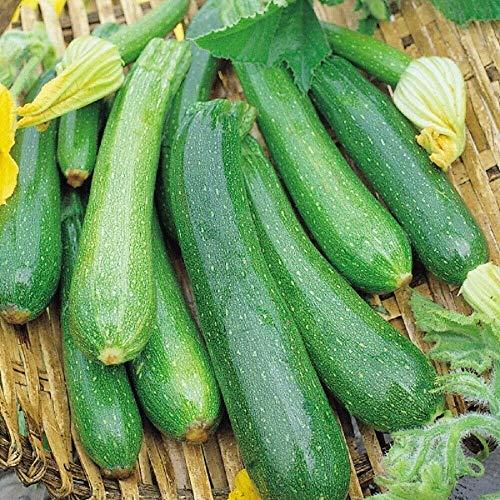 Suffolk Herbs Bio Zucchini Partenon, 4 Samen