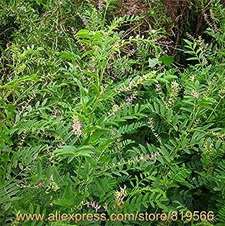 Amazon.es: bonsai arbol natural: Industria, empresas y ciencia