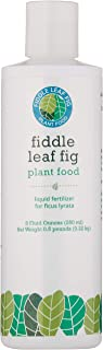 Fiddle Leaf Fig Tree Plant Food for Ficus Lyrata – Calcium Fortified, Urea-Free and with NPK Ratio of 3-1-2 for Healthy Roots, Stems and Leaves (8 Ounces))