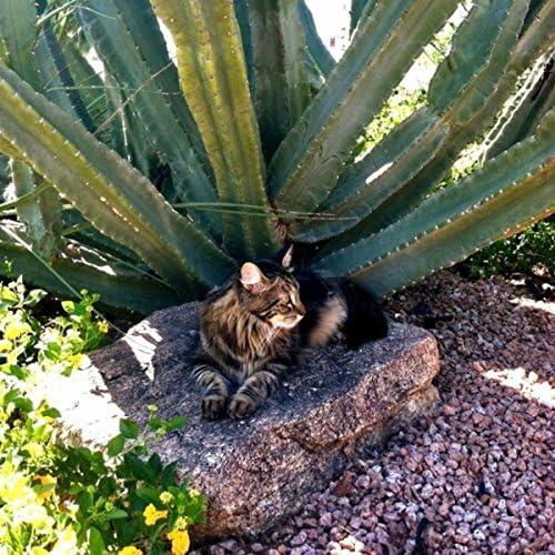 Blender CATs