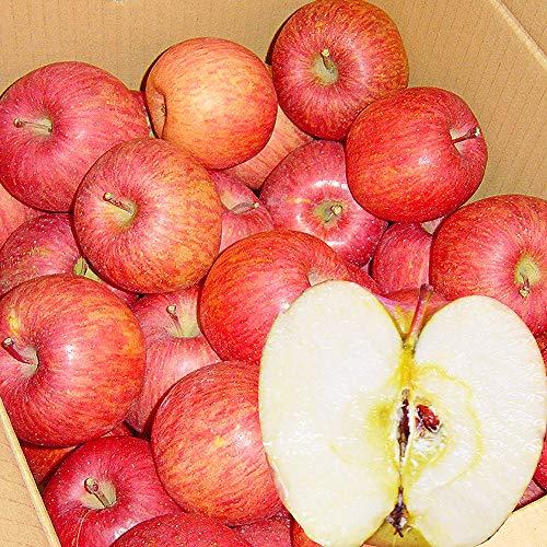 山形産 サンふじ りんご 5kg 約12〜20玉前後 訳あり ご家庭用