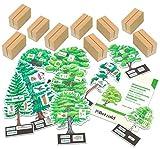 Betzold 755562 - Bäume bestimmmen leicht gemacht mit Holzaufstellern - Betzold
