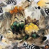 FHzytg 270 Stück Naturfeder Federn zum Basteln, Traumfänger Basteln, Federn Maske 7 Verschiedene Federn Basteln für Traumfänger Hochzeit Geburtstag Party Masken Hüte Tanzkleidung Halloween Dekoration