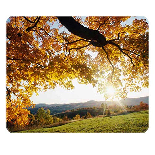 PigBangbang,Autumn Leaves Glowing in Sunlight Non-Skid Rubber Base Ultra-Smooth Surface Gaming Mouse Pad (10.3X8.3) Stitched Edges