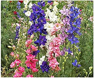 larkspur giant imperial
