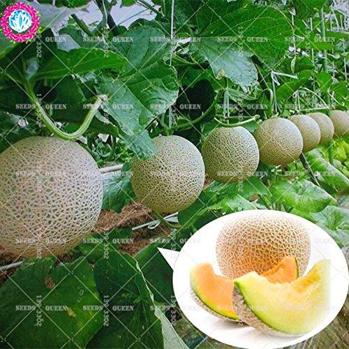 11.11 grande promotion! 50 pcs/lot géant graines d'arbres fruitiers de jus de graines de melon brodé jardin vert et la maison aweet plante vivace d'herbes biologiques