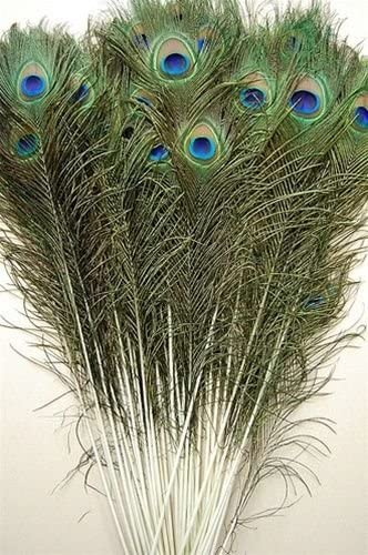 Super-cheap 100 Pcs New color Natural Peacock Feathers 25