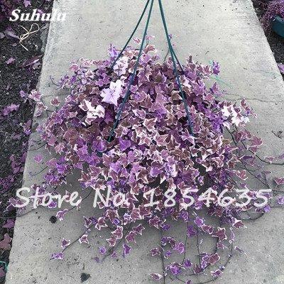 Rare Bonsai Fleur Graine jardin aérobie pot purifiant Air, décorations pour soirée de mariage ou cadeau d'anniversaire 30 Pcs 12