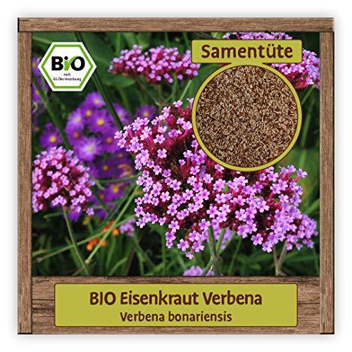 BIO Eisenkraut Samen (Verbena bonariensis) Blumensamen Bienen-Weide Verbene Saatgut