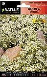 Semillas de Flores - Aliso Anual